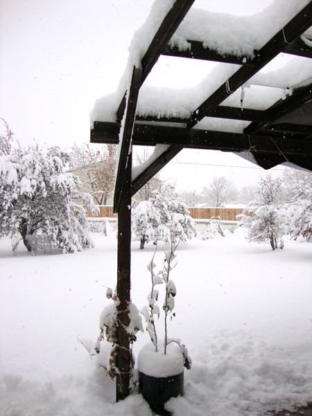 snow1sm